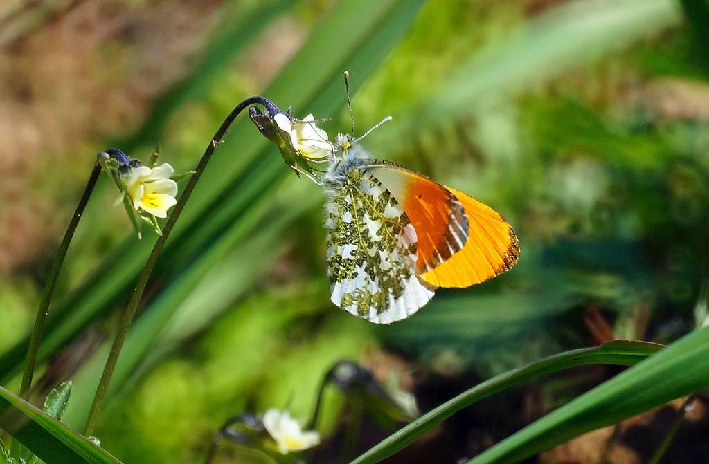 Бабочки сибири: фото и интересные факты — блог милы