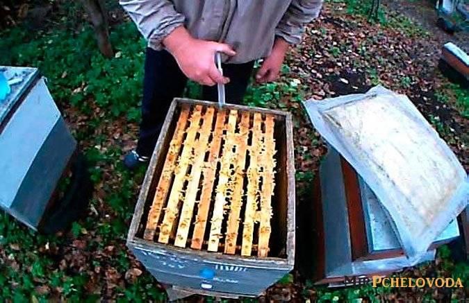 Обработка пчел от клеща осенью бипином - приготовления раствора, дозировки, сроки