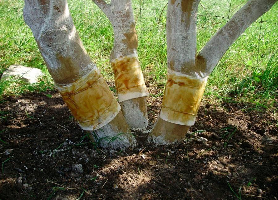 6 способов избавиться от муравьев на деревьях садового участка