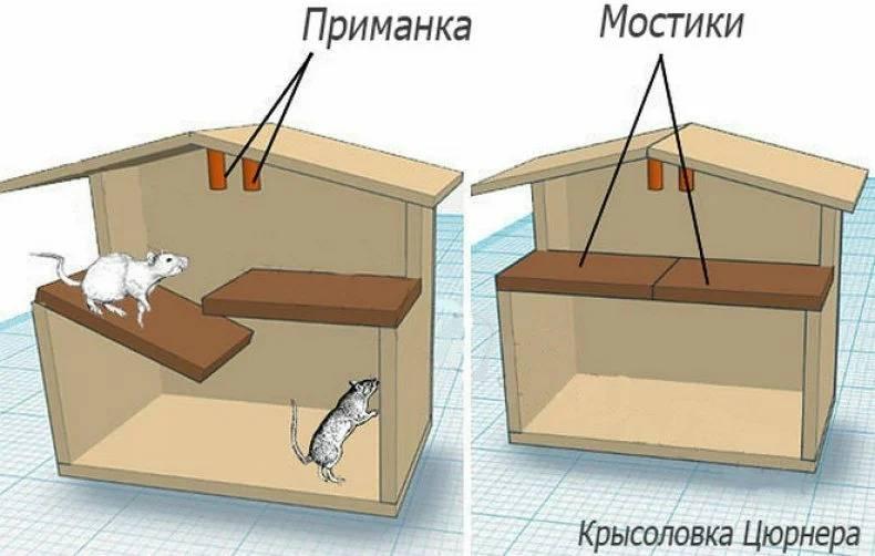 Крысоловки своими руками в домашних условиях: виды ловушек для грызунов и их изготовление