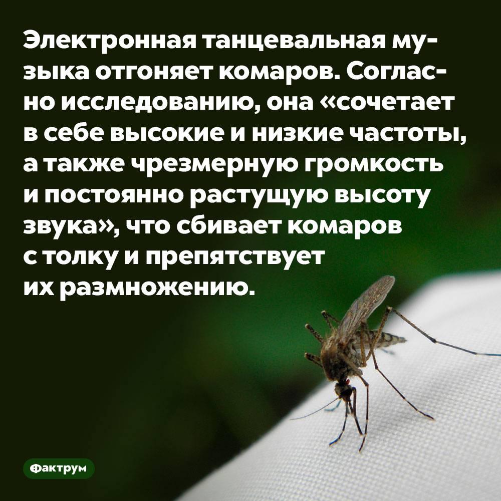 24 интересных факта о насекомых