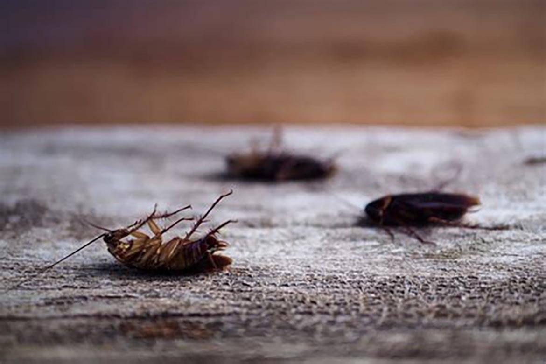 Уничтожение тараканов перепадом температур