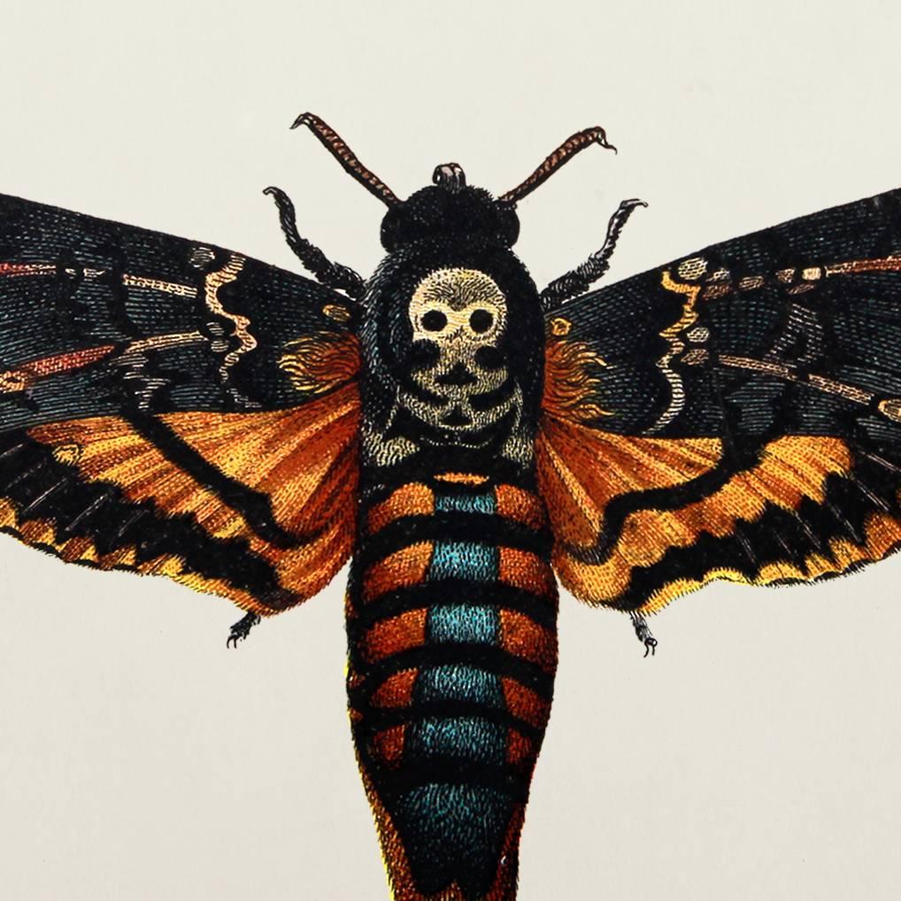 Бражник мертвая голова в кино, литературе, факты и вымыслы про бабочку