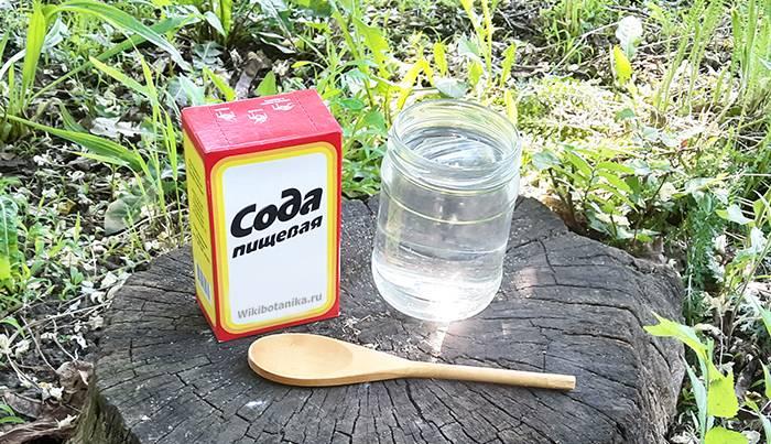 Эффективный способ избавления от тли на яблоне при помощи соды.