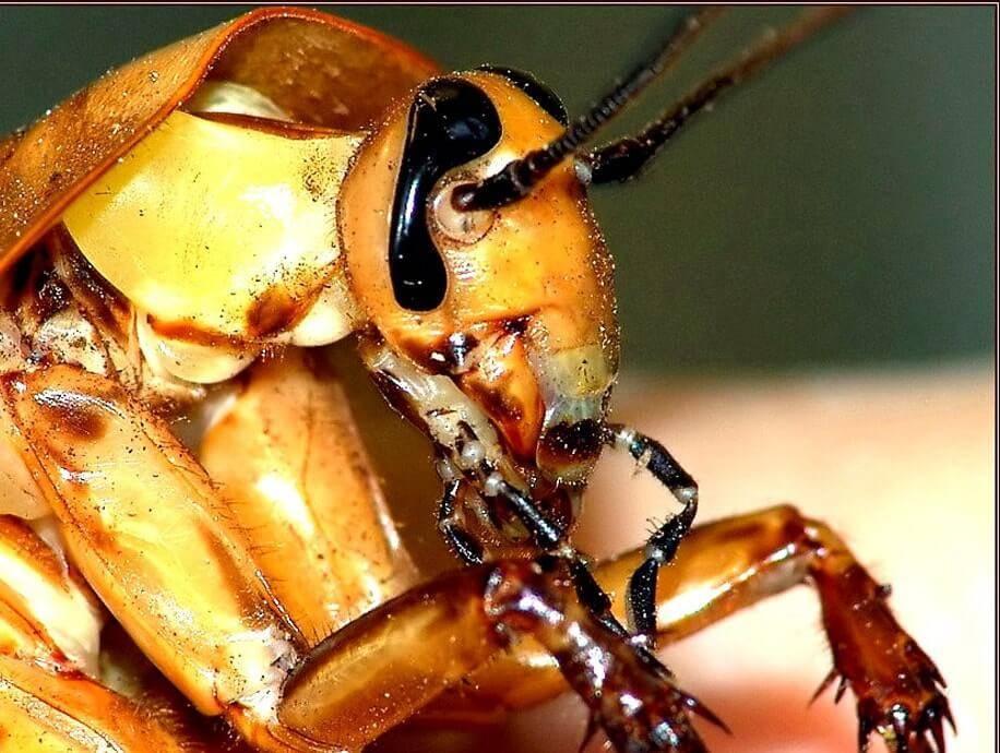 Кто питается колорадским жуком: естественные враги полосатика