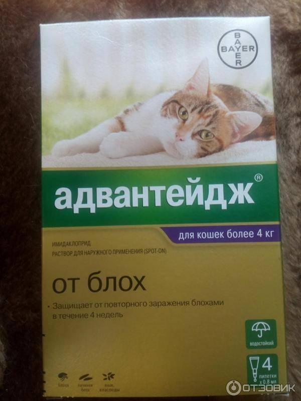 Капли адвантейдж для кошек, инструкция и противопоказания