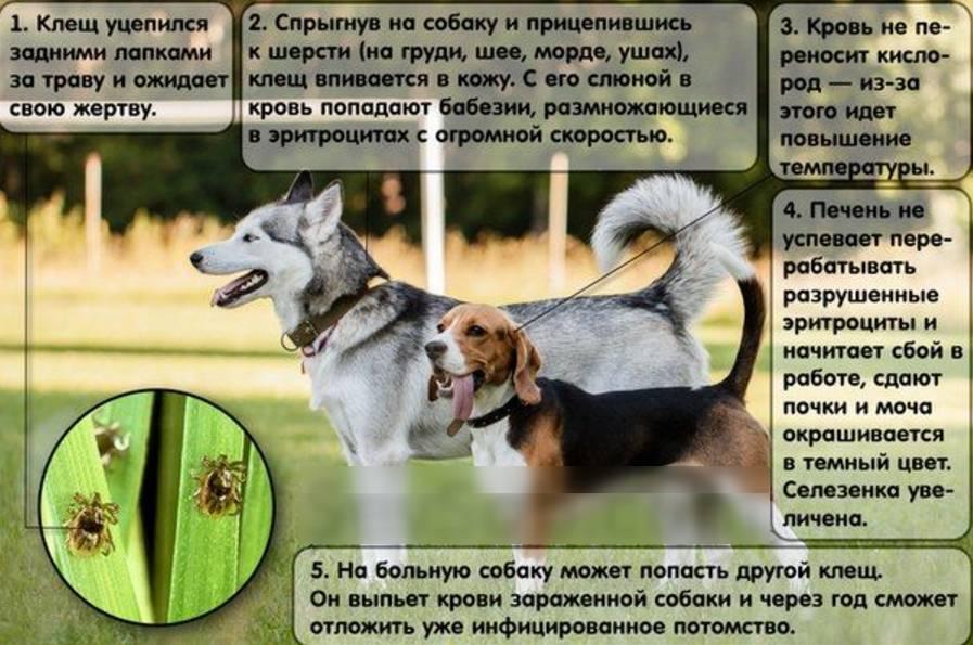 Как защитить собаку от клещей | dogkind.ru