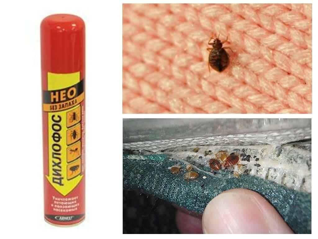 Как избавиться от клопов: действенные методы в домашних условиях, как уничтожить постельных насекомых