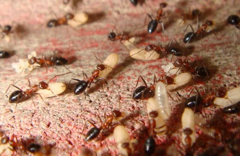 Большая угроза маленьких врагов: 5 способов обнаружить в доме термитов