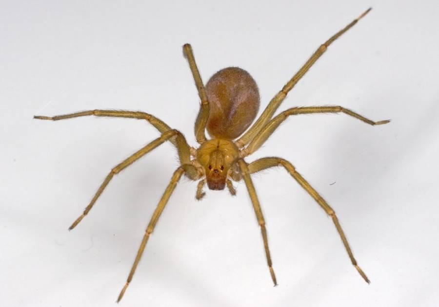 Что делать если укусил паук, первая медицинская помощь в домашних условиях.
