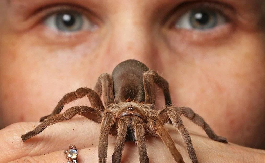 Паук тарантул: страшное чудовище или домашний любимец?