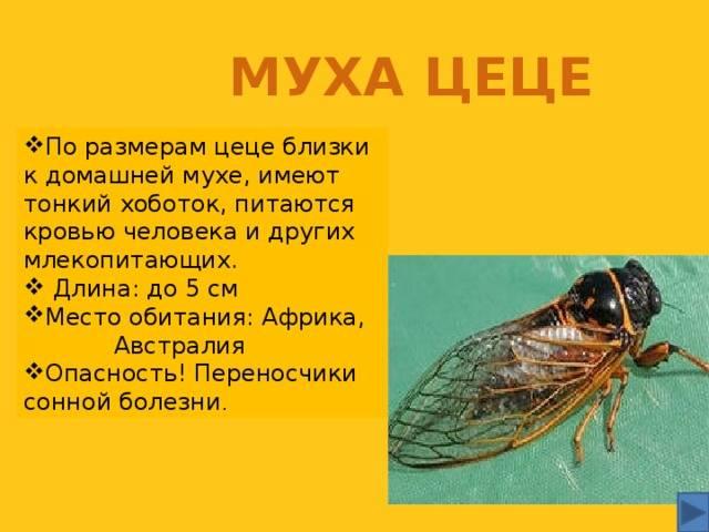 Познакомимся с мухой поближе