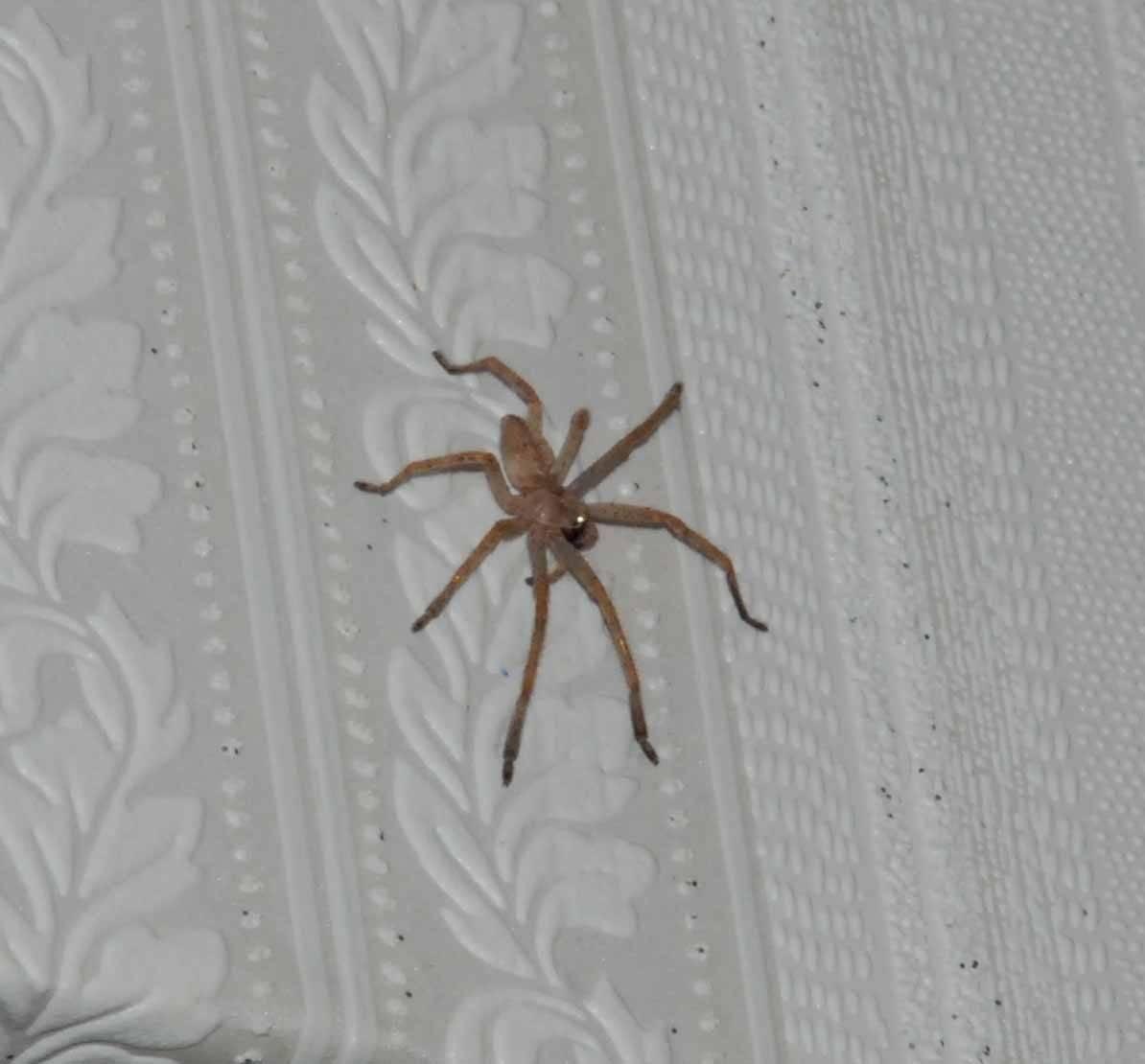 Как изгнать пауков из дома. верные способы избавиться от пауков, поселившихся у вас дома