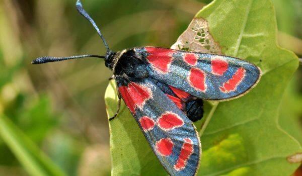 Американская белая бабочка – способы борьбы