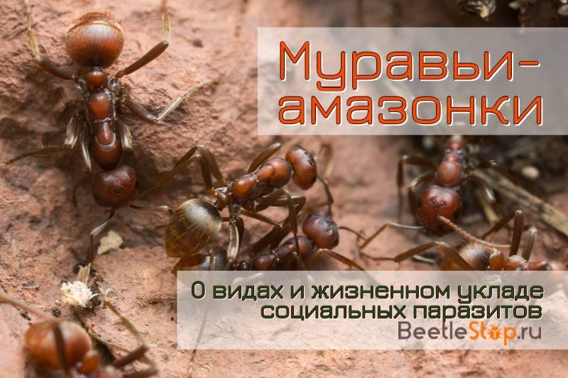 Ящик пандоры – муравьи и искусство войны