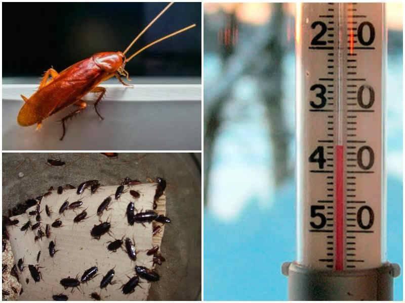 Как узнать, при какой температуре погибают клопы?