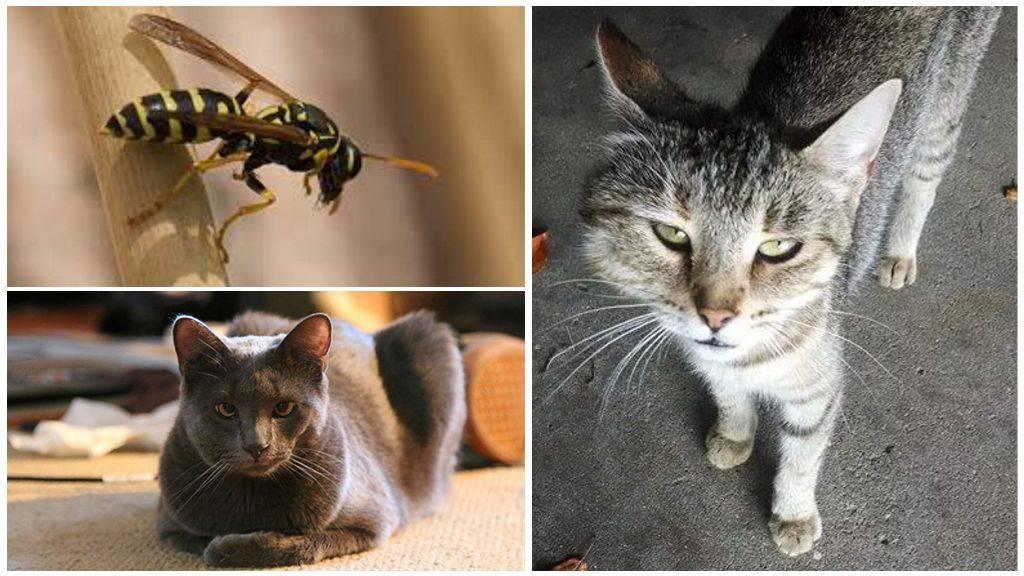 """Собаку в лапу укусила оса – собаку укусила пчела, оса: что делать - зоосалон """"филимон"""""""
