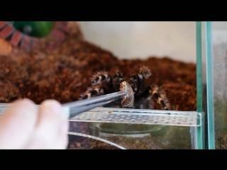 ᐉ чем кормить паука в домашних условиях? - zoomanji.ru