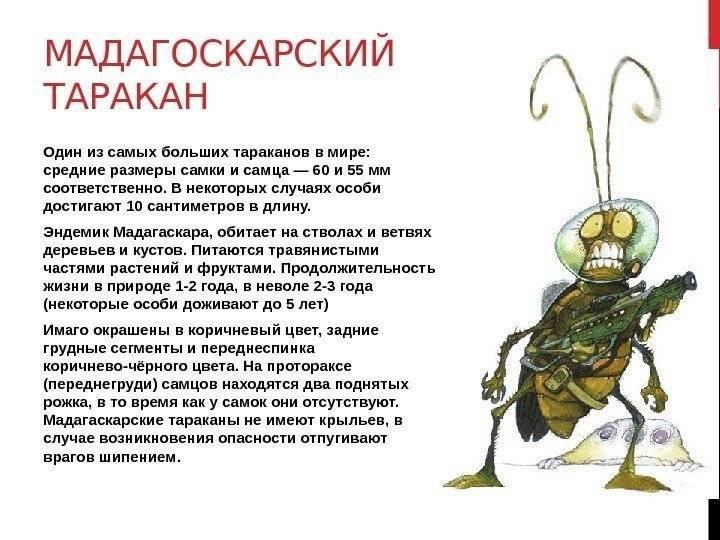 Тараканы в квартире: что нужно знать, чтобы навсегда избавиться от этих насекомых