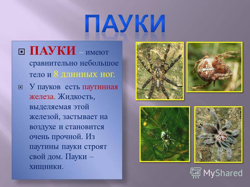 Какие бывают пауки: виды, названия, чем питаются, где обитают