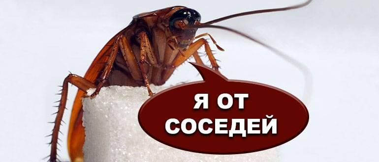 Что делать если ползут тараканы от соседей
