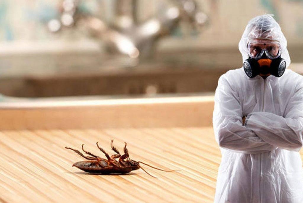 Способы как травить тараканов в квартире инсектицидами, ловушками