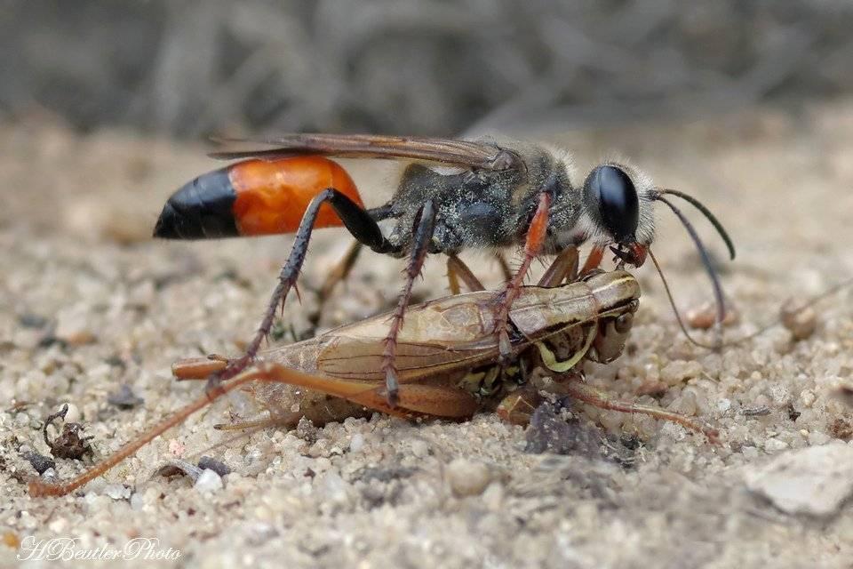 Какие насекомые являются помощниками садовода