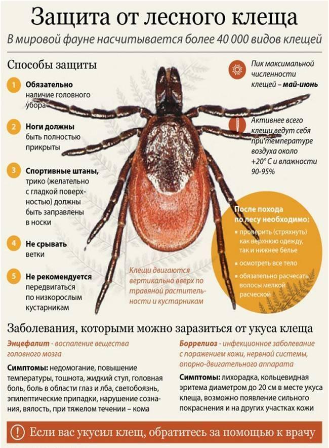Энцефалит: симптомы, диагностика, лечение