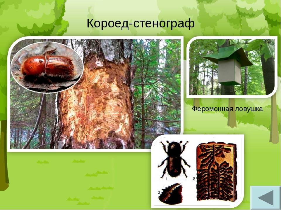 Основные пути решения проблемы для избавления от жука-короеда в доме | папа мастер!