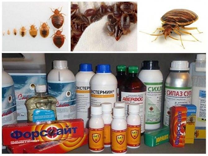 Средство от клопов без запаха: выбираем самое эффективное