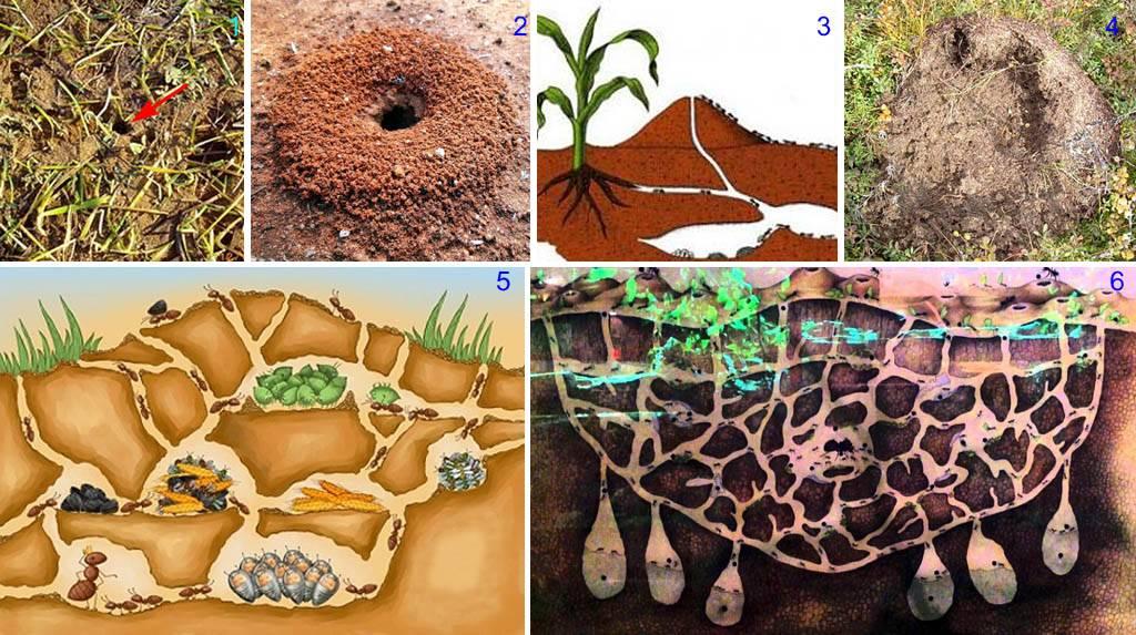 Польза и вред муравьев в огороде и на садовом участке