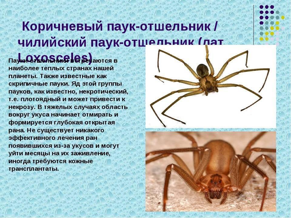 Как выглядит и что делать при укусе паука