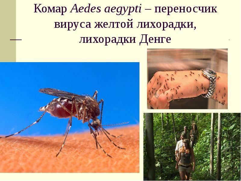 Может ли гепатит с передаться через укус комара – всё о болезнях печени