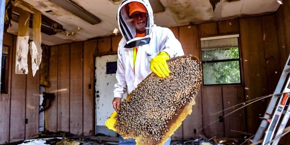 Как избавиться от древесных пчел в стене дома: 6 действенных способов борьбы