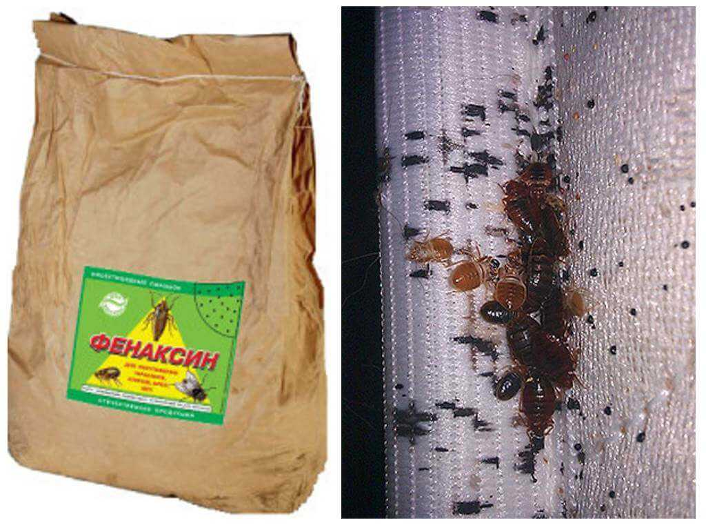 Порошок от таракановтиурам, фенкасин, пиретрум - какой лучше, отзывы