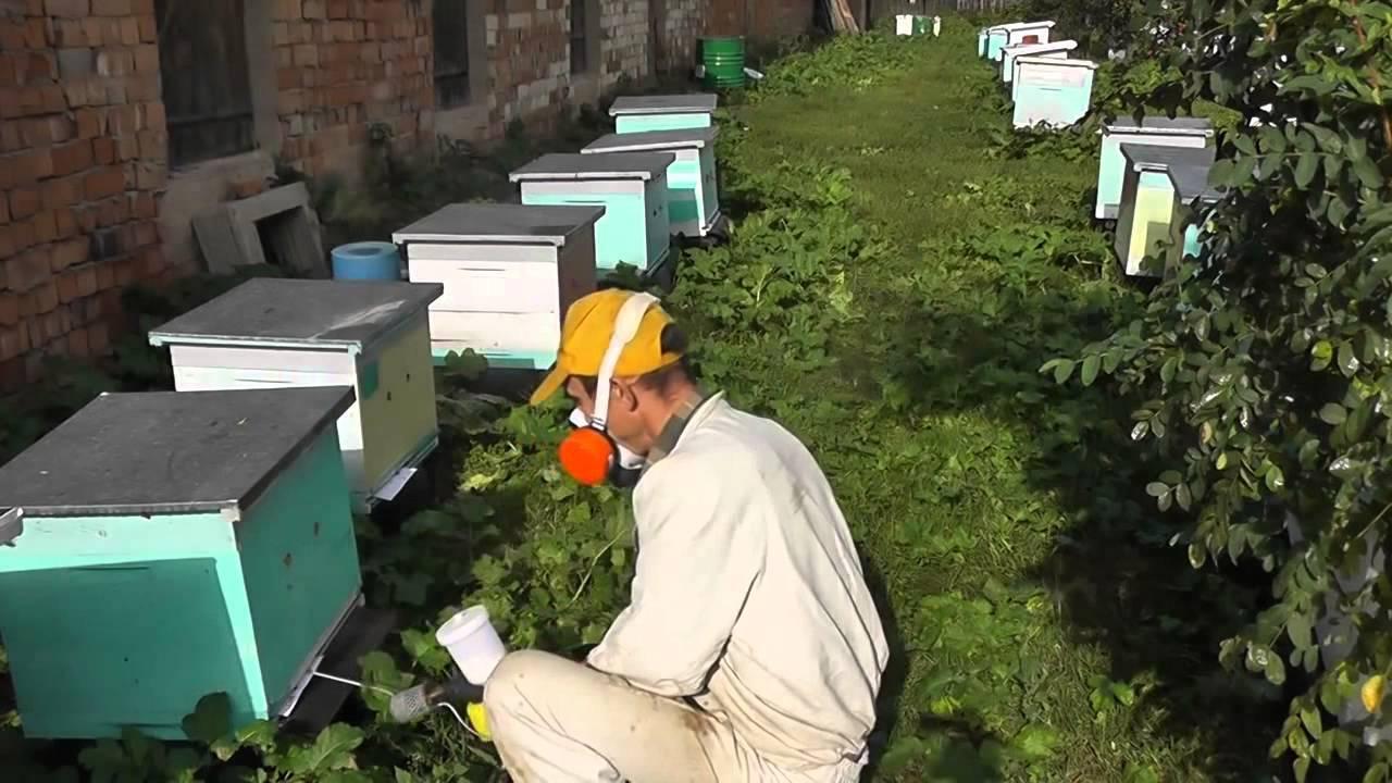 Обзор препарата бипин для пчел: инструкция по применению, техника обработки и отзывы обзор препарата бипин для пчел: инструкция по применению, техника обработки и отзывы