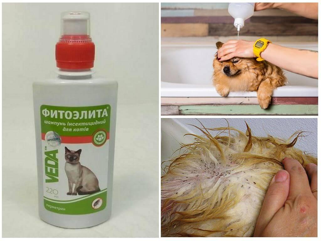 Как избавить домашнее животное от блох: эффективные методы и средства