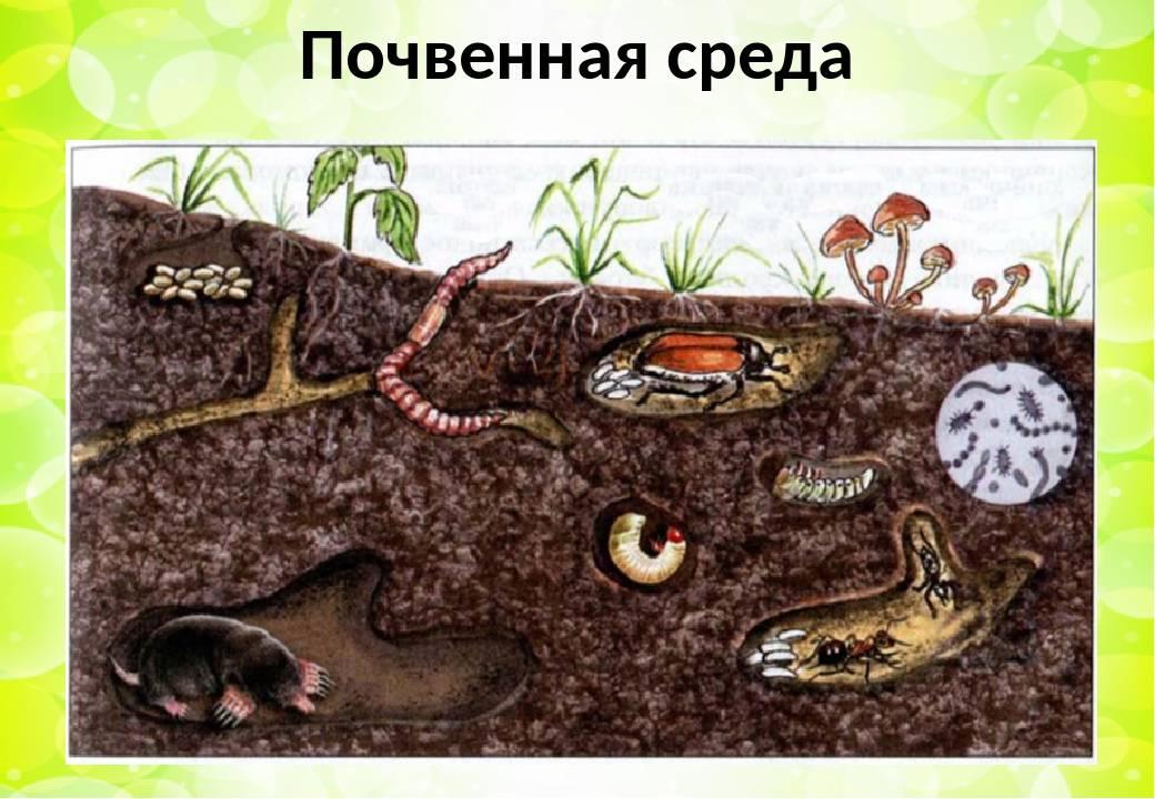 Операция «крот». борьба с кротами на участке. как избавиться, средства, ловушки. фото — ботаничка.ru