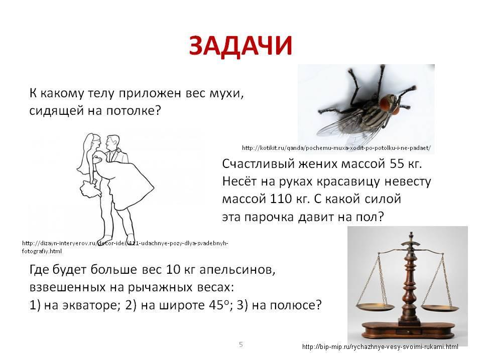 Как бороться с мухами в квартире, и зачем насекомое «потирает лапки»