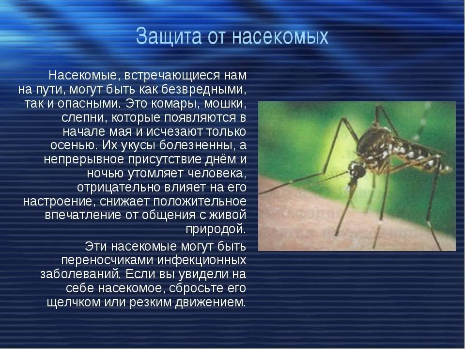 Что едят комары? | вечные вопросы | вопрос-ответ