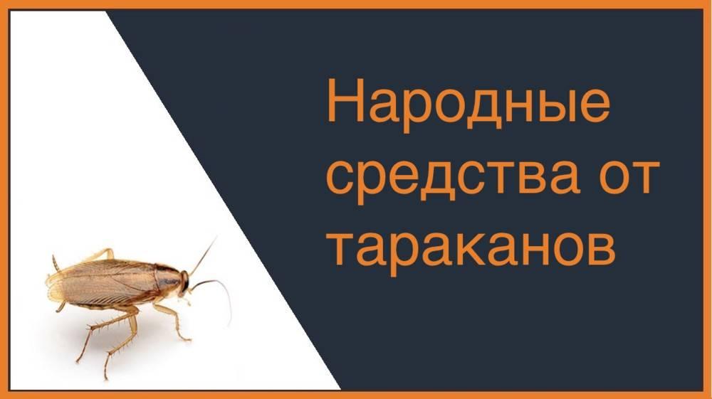 Как избавиться от тараканов - лучшие народные методы избавления (85 фото)