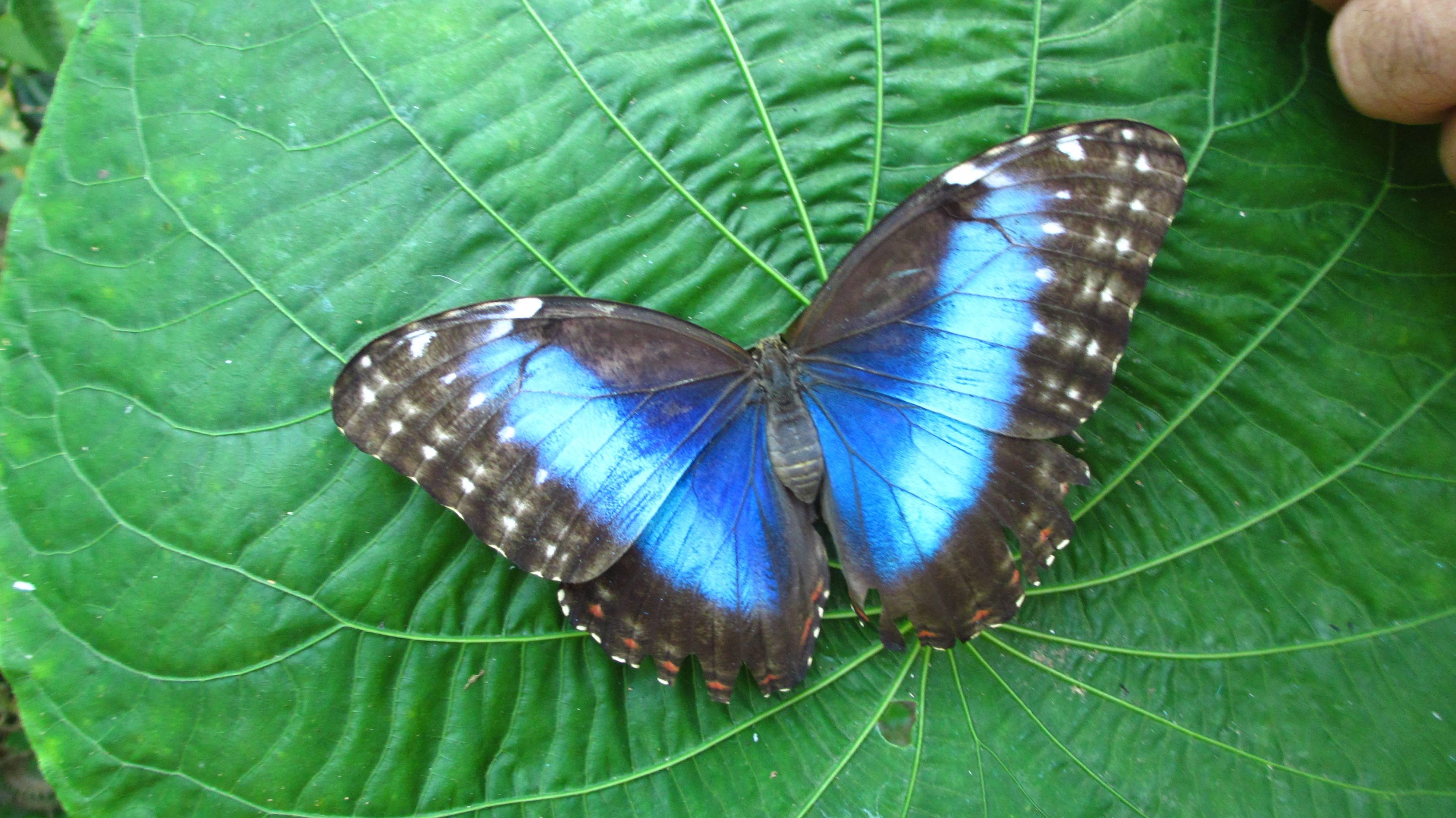 Тропические животные: список, виды, названия, описания и фото