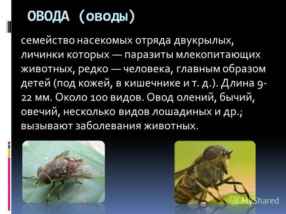 Членистоногие паразиты человека - виды и защита от них