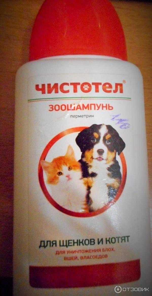 Каким шампунем избавить кота от блох