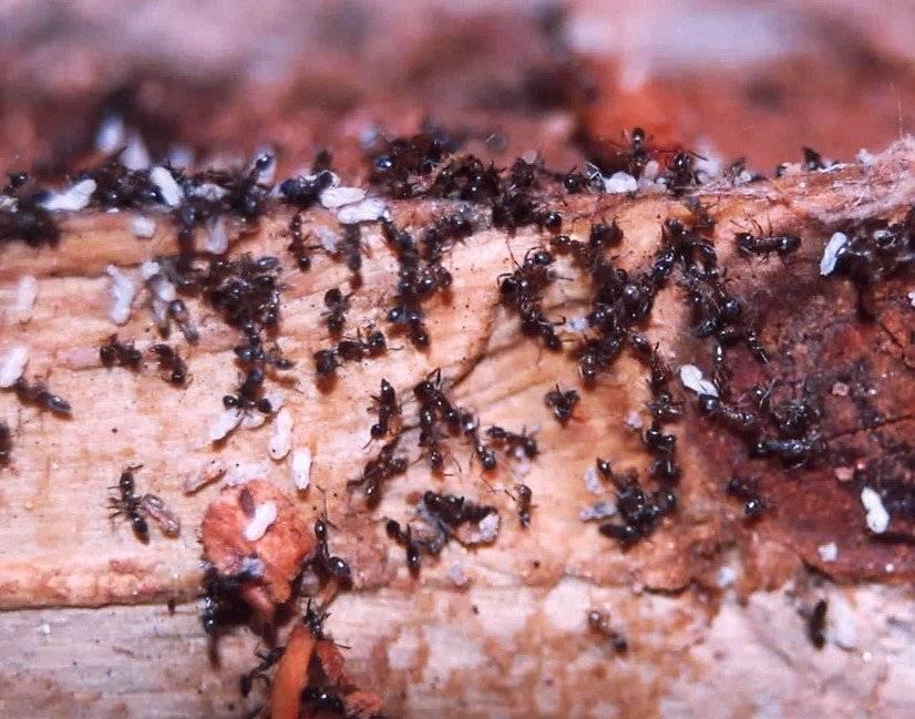 Термиты в доме. как избавиться от термитов? термиты и борьба с ними