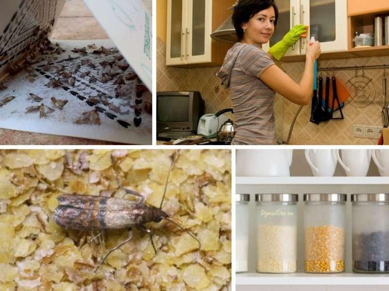Как бороться с молью: в квартире, в домашних условиях, народными средствами