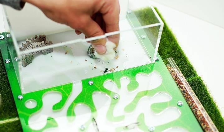 Как построить муравьиную ферму - wikihow
