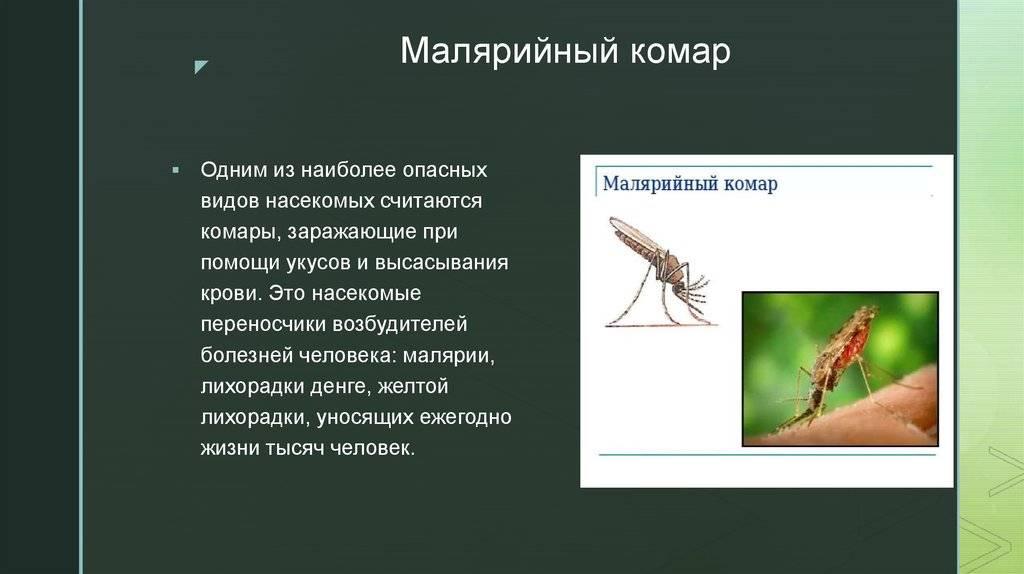 Личинка комара (куколка): развитие, чем питается, как выглядит, обитание