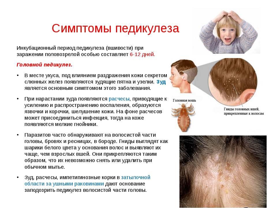 Как передается головная вошь и симптомы заражения