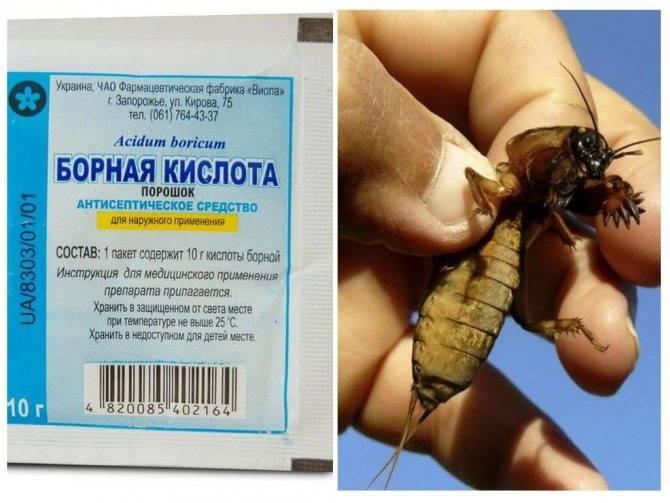 Средство от колорадского жука регент и регент 800: инструкция по применению (фото)